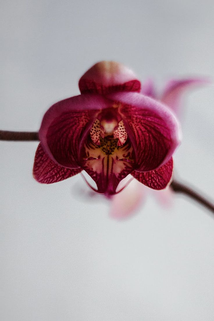Shallow Focus Photography of Pink Orchid