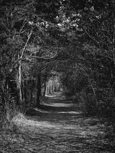 bwstock.photography - photo | free download black and white photos  //  #forest #tunnel