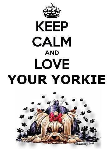 Keep calm and love your yorkie
