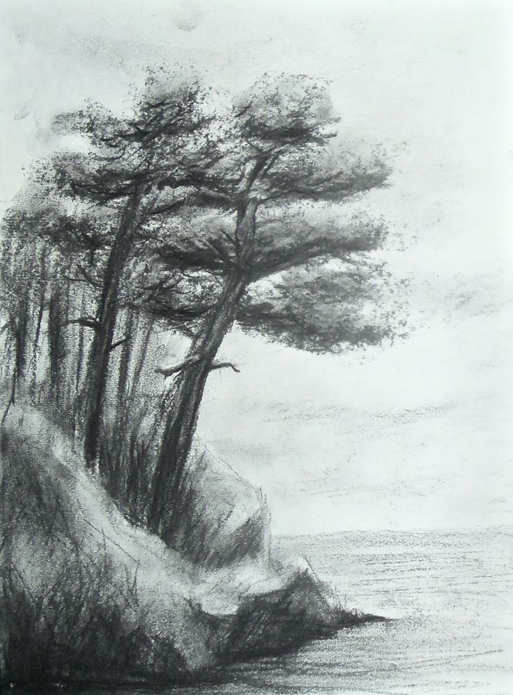 Original charcoal drawing. Pines beside the sea.