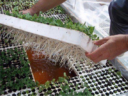 Выращивание помидор по методу МасловаИ. М. Маслов, занимаясь выращиванием томатов, разработал свою собственную методику, позволяющую в разы увеличивать урожайность помидор, их качество, сохраняя абсол…