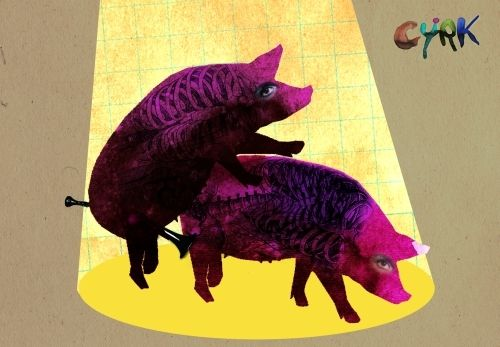 Kaja Renkas, Cyrk (świnki), Size: B1