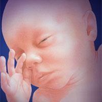 Календарь беременности по неделям с фотографиями, беременность в картинках. Развитие эмбриона, зародыша человека в матке, размеры по неделям...