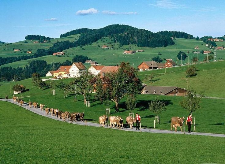Could totally be Keroon | Beautiful Rural area and it must be very good for milk cattle. Appenzell, Switzerland - Pixdaus