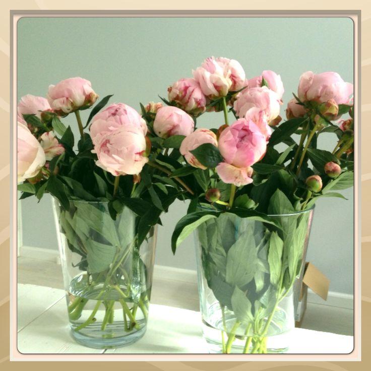 I love pioen rozen!! Lievelings bloemen van me zusje en ik...