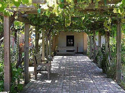 Can't wait till our vines look like this! Love the walk way as well!