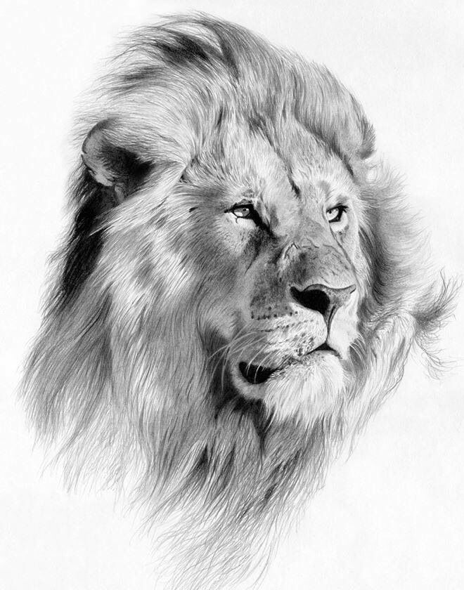 Best 25+ Lion drawing ...