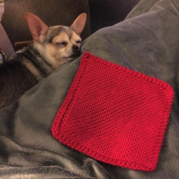 I finished my first dish cloth! Working on my second as we speak! #crafty #knit #knitting #knitty #knits #knitter #knitters #instaknit #euphoricyarn #yarn #yarnporn #knittersofinstagram #instastitch #dishcloth #handknit #handmade #madewithlove #imadethis #DIY #cottonyarn #chihuahuasofinstagram #chihuahua #stitches #needles by euphoricyarn