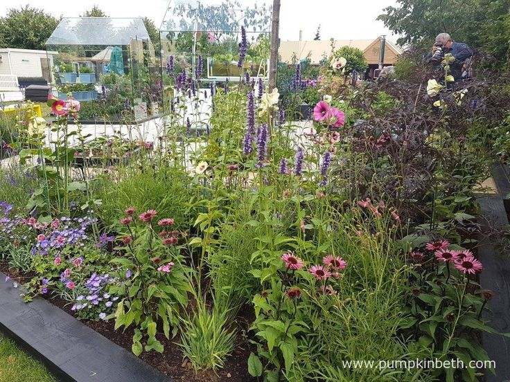 Every plant that featured in the RHS Kitchen Garden is edible, including these beautiful flowers: Echinacea, Agastache, and Alcea rosea. Pictured at the RHS Hampton Court Palace Flower Show 2017.