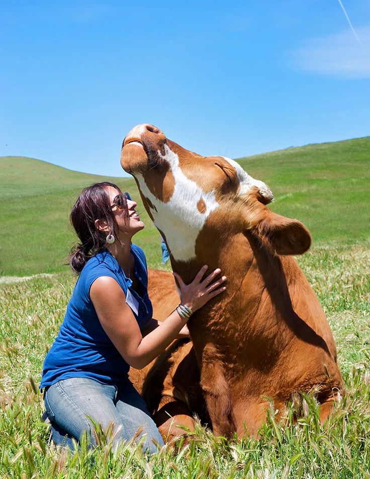 """""""He loves to be pet, loves to be kissed. They're no different than dogs and cats - they can feel pleasure and they can feel pain,"""" That's the sentiment you'll hear from anyone who has visited Farm Sanctuary, where people are encouraged to interact with farm animals on a face-to-face basis."""
