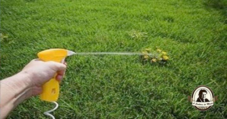 """Num jardim, numa horta ou numa quinta existem muitas zonas de convívio, trabalho e passagem onde crescem persistentemente as chamadas """"ervas daninhas""""."""
