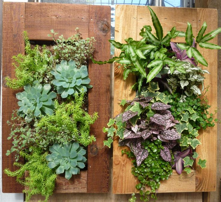 7 Best Go Green Walls Images On Pinterest Living Walls