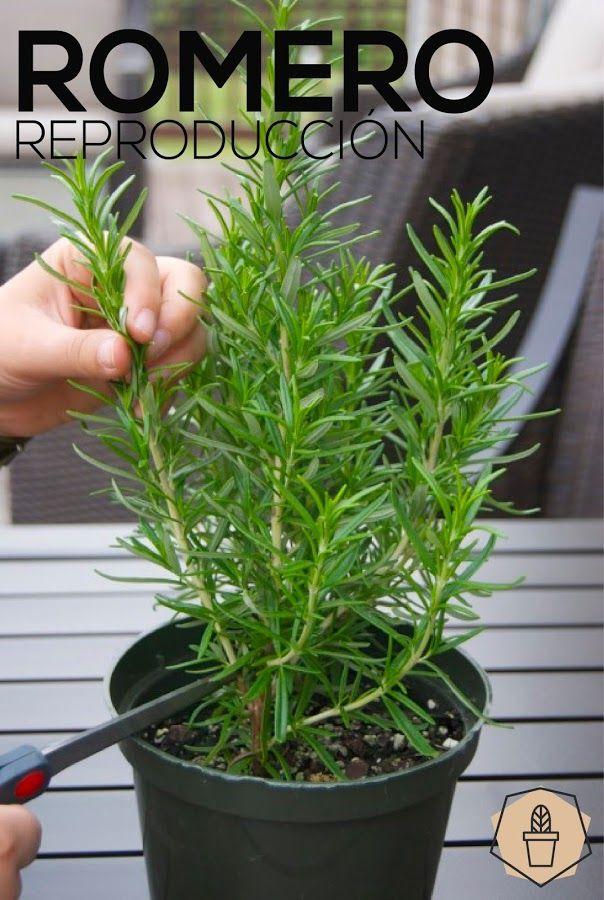 25 gorgeous ideas jardin ideas on pinterest piedras - Macetas originales para plantas ...