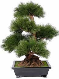 Bonsai Tree Evimin bir köşesinde Bonsai Ağaçlarla mini orman oluşturmak istiyorum.