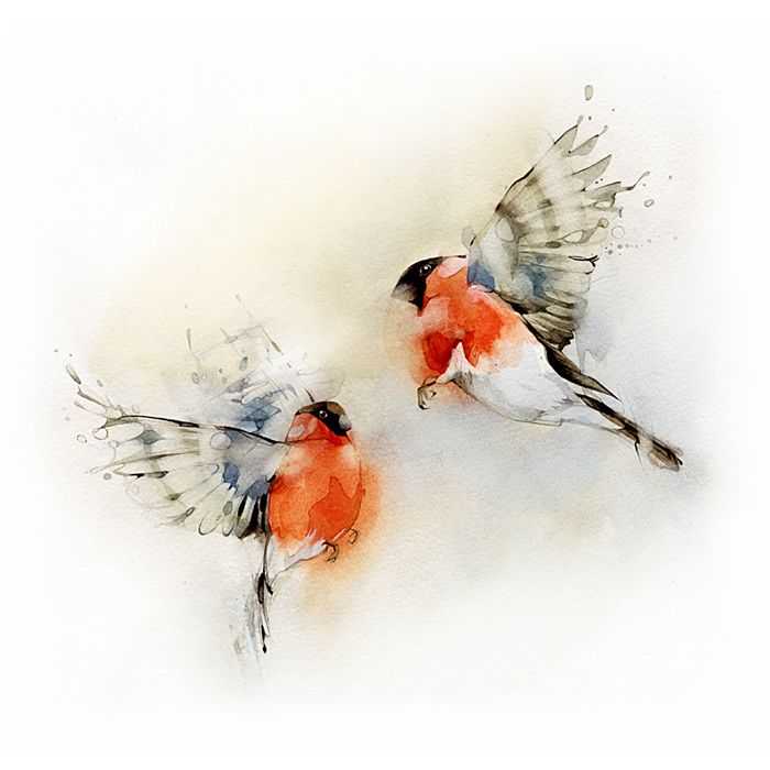 Gorgeous soft watercolor.