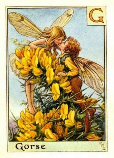 Gorse Flower Fairy » Flower Fairy Prints- Vintage Fairy Prints by Cicely Mary Barker