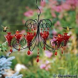 200 best humming birds images by diane mckenney on pinterest chandelier hummingbird feeder mozeypictures Gallery