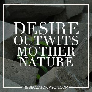 Desire outwits mother nature! #power #business #women #quotes