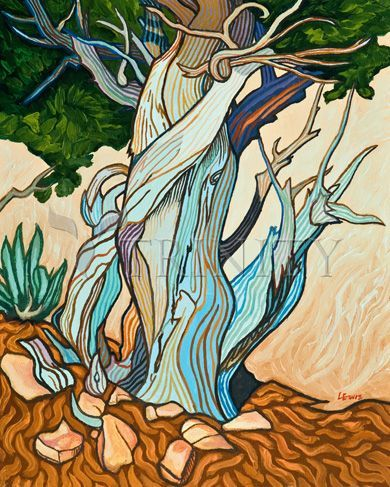 """Slept Under A Juniper 