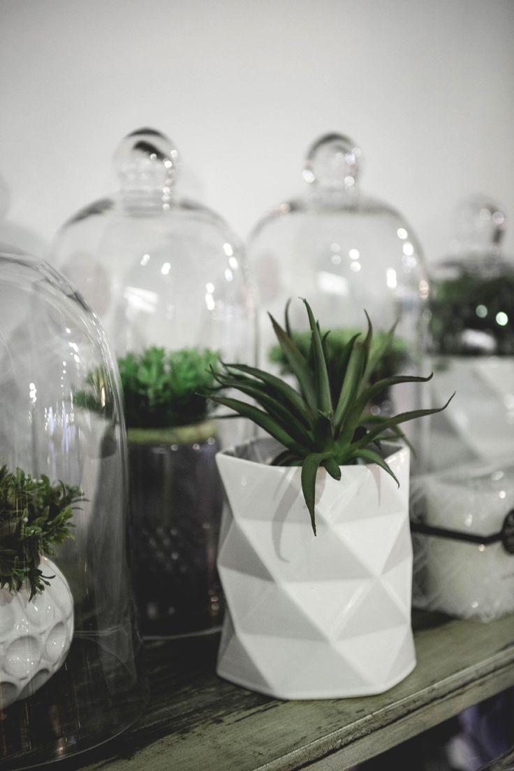 HOMEMAKERS Expo 2015 Johannesburg | Plants