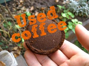 coffee grounds around seedlings are a good snail and slug repellant