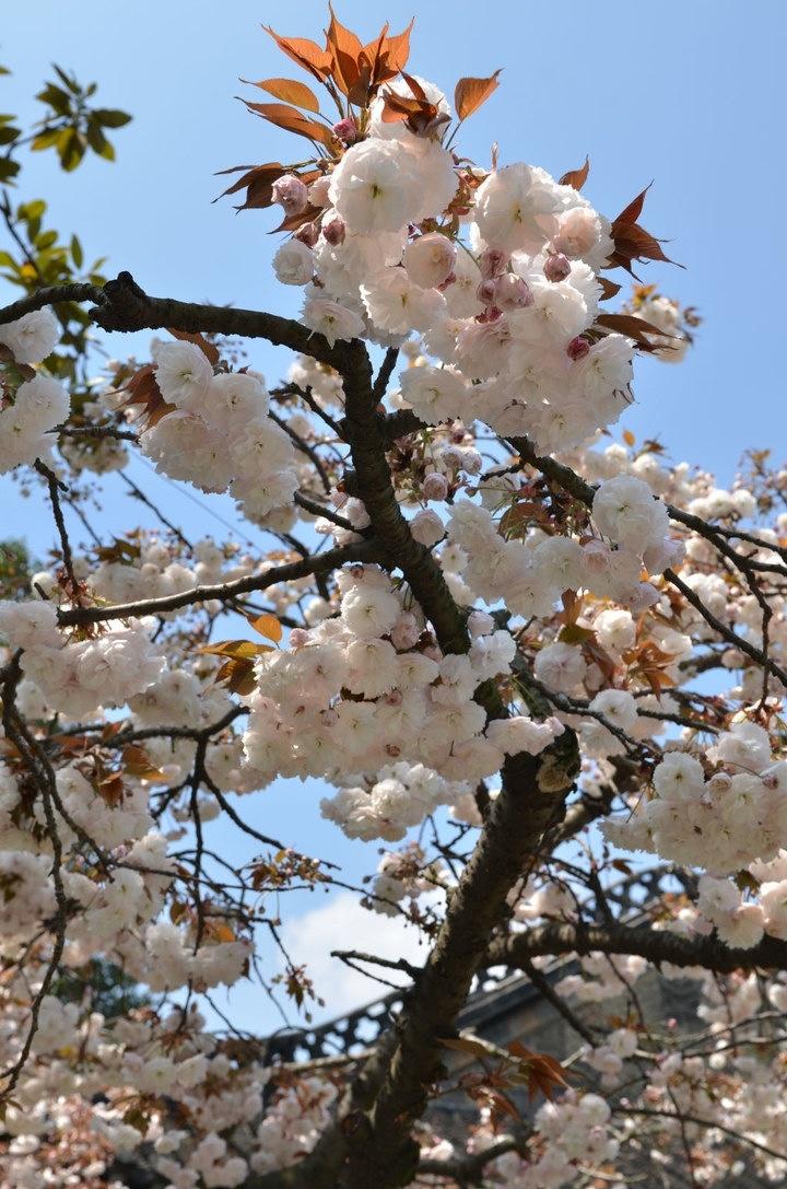 Spring in Yangzhou