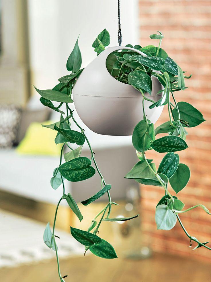 132 best images about truffaut plantes d 39 int rieur on pinterest cactus ice dance and interieur. Black Bedroom Furniture Sets. Home Design Ideas