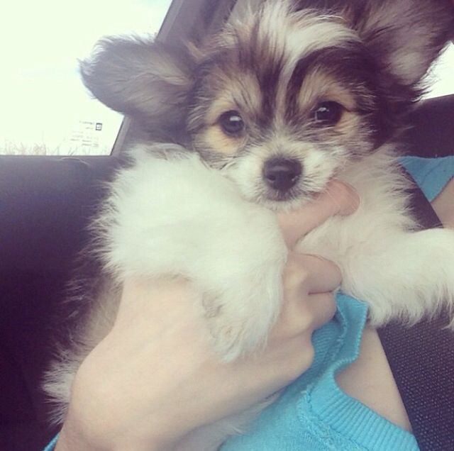 179 Best Images About Puppy Love On Pinterest