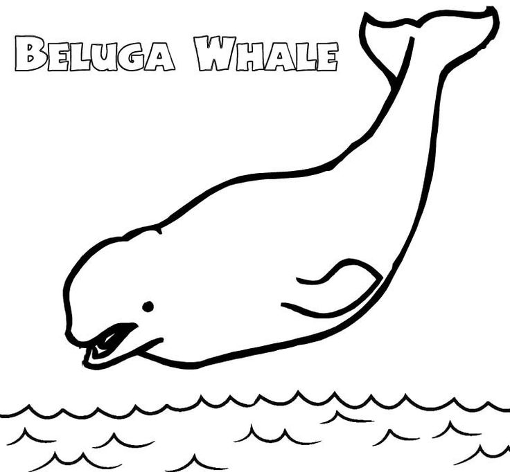 Beluga Whale Colouring Page Art Background