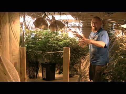 17 Best Images About Indoor Grow On Pinterest Cannabis