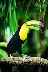aves cuadros al oleo lienzo