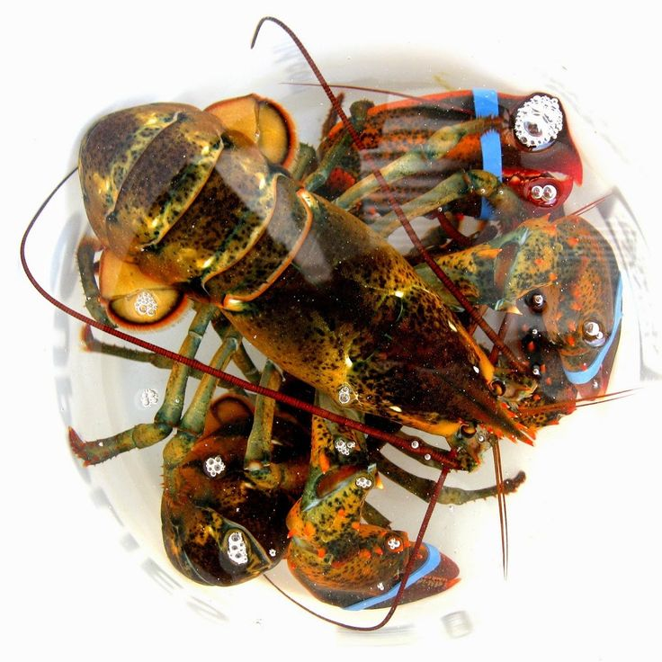 Handling a lobster for the first time can be intimidating. Luckily Christina has the pro-tips.