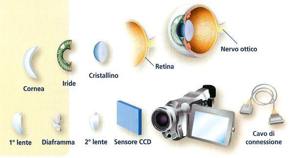 Occhio umano e fotocamera hanno tantissimo in comune, molto più di quanto si può immaginare vedendo una macchina fotografica da vicino. Vediamo nel dettaglio