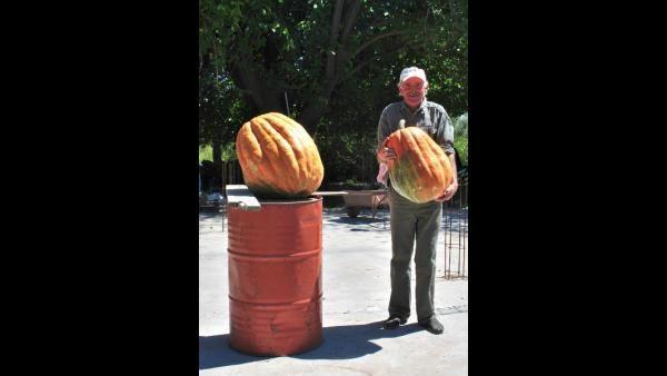 Entre Ríos: foto de zapallo gigante que pesa 50 kilos | TN y la Gente | TN.com.ar