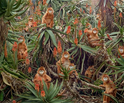 : Untitl 174, Orange Flower, Art, Beautiful Photographers, Yossi Milo, Photography, Monkey, Simen Johan, Animal