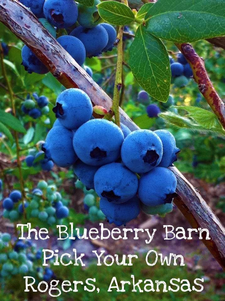 The Blueberry Barn  Rogers, Arkansas