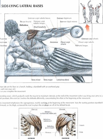 Lying Lateral Raises   #exercise #workout #routine #fitness