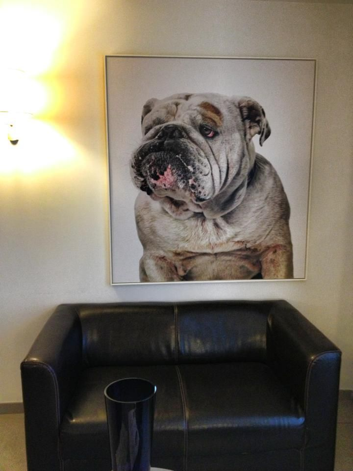 An English Bulldog Painting It Looks So Real Bulldogpainting