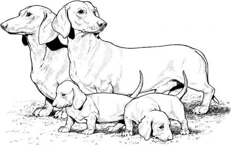 dog color pages printable | Dachshund With Puppies coloring page | Super Coloring