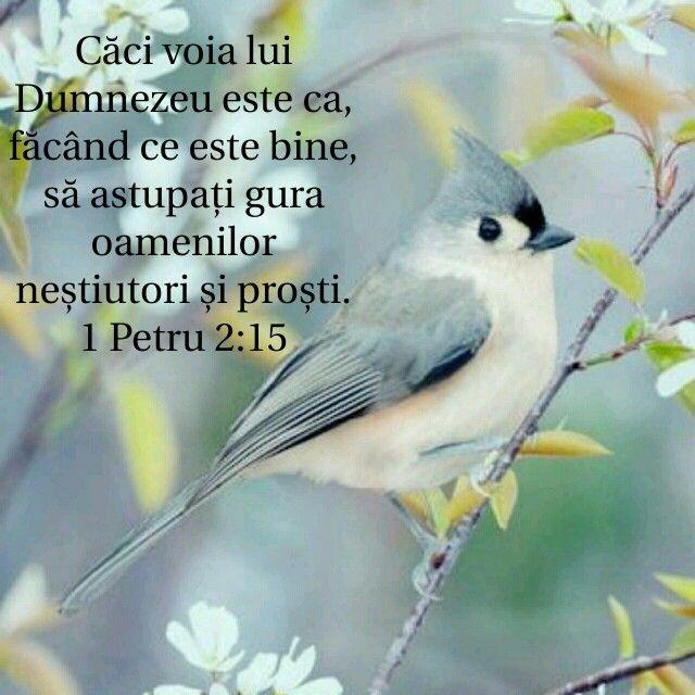1 Petru 2:15