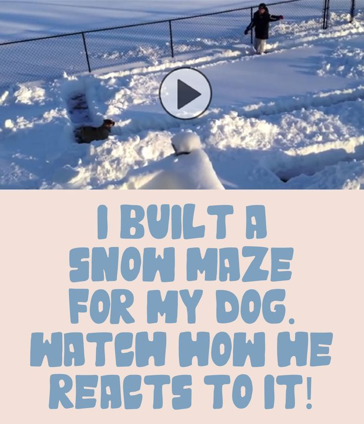This person built a snow maze just for their dog - watch how he reacts!