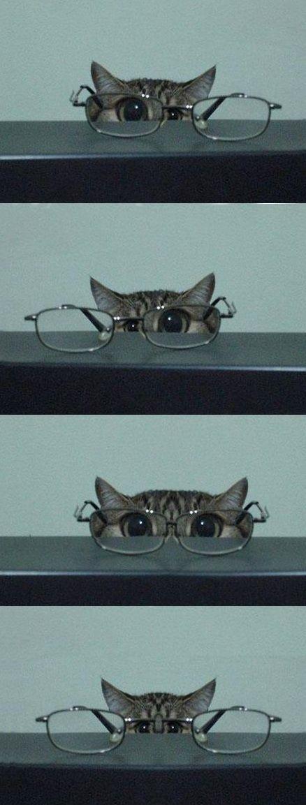 Glasses | Follow board on: http://pinterest.com/riccai/mes-amis-les-animaux/
