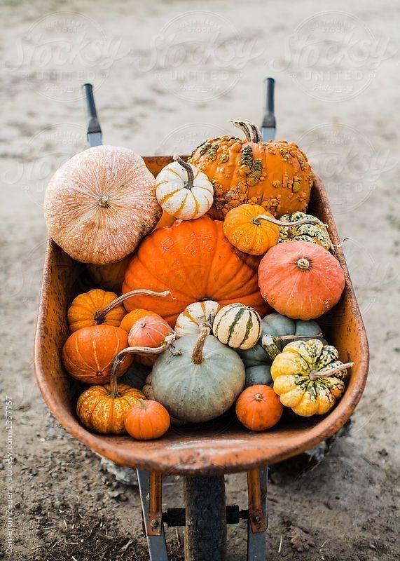 Get 30 Free Fall Wallpaper To Make You Feel Warm And Cozy Fall Wallpaper Pumpkin Fall Pumpkins
