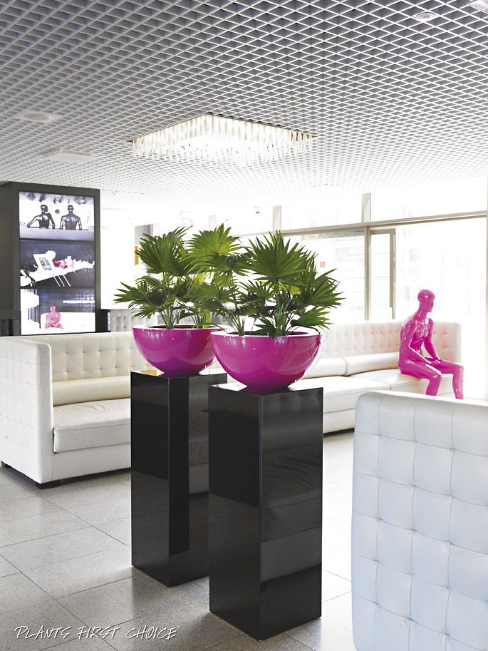 Are you looking for plants and planters similar to this? ...adding a touch of excellence and class...Stand Tall! Get in touch to request a brochure or discuss exactly what you are looking for, it's more than likely that we'd supply it! Check out our other live plants or give us a call and we'd be more than happy to chat.