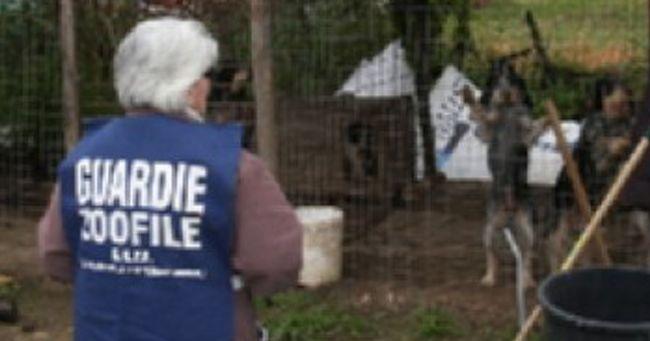 Scoperto canile abusivo in una riserva con 15 cani da caccia