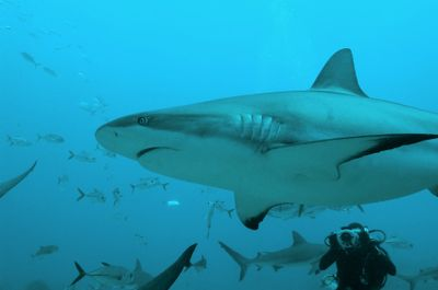 Dangerous Fish and Sea Animals: Most Fish and Sea Animals Are Not Dangerous, But . . .