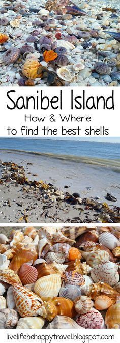 A must read if you are planning a trip to Sanibel Island, Florida. - Shelling Sanibel, Florida