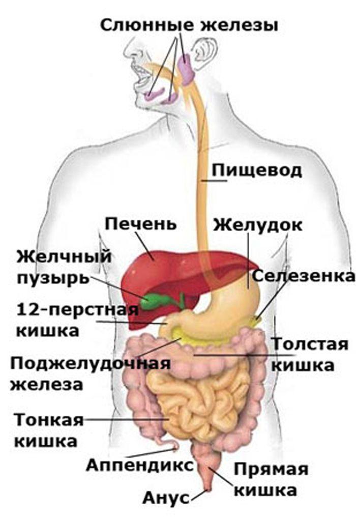 Лечим поджелудочную железу сами Поджелудочная железа – секреторный орган Он вырабатывает несколько видов ферментов которые участвуют в пищеварении Её заболевание связано с погрешностью в питание употребления алкоголя а так же отрицательными эмоциями Если лечить симптомы с помощью таблеток и не обращать внимание на гнев http://shkolapsyhologii.blogspot.ru/2016/06/blog-post_9.html#more