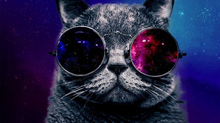 Space Cat Wallpaper Free