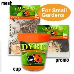 Lady bugs for organic gardening...Live Ladybugs for Sale - Ladybird Beetles for Aphid Control